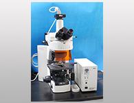 电动显微镜成像系统(nikon-80i)